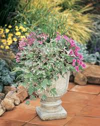 Plant Combination Ideas For Container Gardens - 103 best container garden recipes images on pinterest proven
