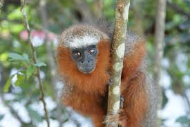 brown beige and white monkey free image peakpx