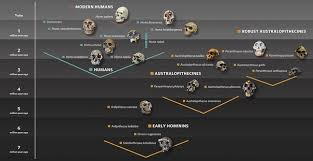 where did humans really come from updated quora