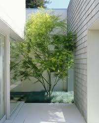 garden small courtyard modern single house design with white