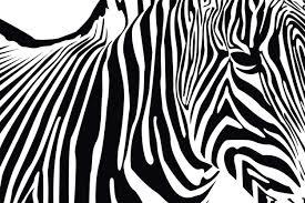 Zebra Bedroom Wallpaper Livingwalls Photo Wallpaper Zebra 036430