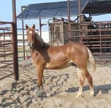 mustang adoption number 6721 image name 6721 3 jpg horses