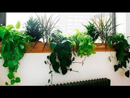 best low light house plants best indoor plants best indoor plants low light youtube