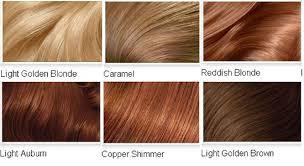 Light Brown Hair Color Chart Chart Paketsusudomba Co