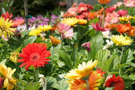 Outdoor Potted Plants Full Sun by Annual And Perennial Flowers Pittsburgh Pa Best Feeds Garden