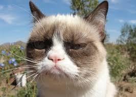 Grumpy Cat Meme I Had Fun Once - tard the grumpy cat turns 1 year old leading to a world celebration