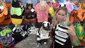 petcohalloween best pet costumes for halloweenbettertogether