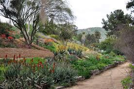 Ucr Botanical Gardens Ucr Newsroom Primavera In The Gardens