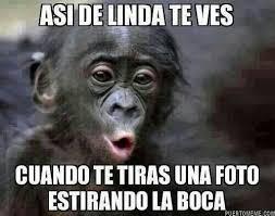 Funny Monkey Meme - memes chistes mexicanos funny en español pinterest memes