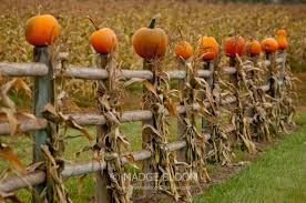 Best Pumpkin Patch Snohomish County by Snohomish County U2013 The View From Right Here
