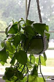 choosing the right hanging planters idea to beautify indoors and