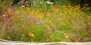 plants native to uk how to create a wildflower meadow in your garden eden project