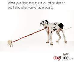 Great Dane Meme - 45 more hilarious dog memes to make your day better dogtime