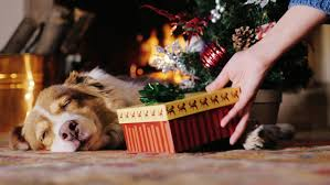 Dogs Decorating Christmas Tree Video kittens are sleeping in the large cup among the new year u0027s