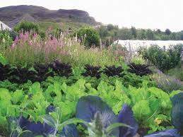 13 best soil food web images on pinterest food webs garden soil