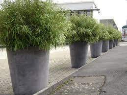 abri jardin bambou bambou pour jardiniere terrasse sedgu com