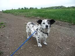 25 cute cross breed dogs fall love