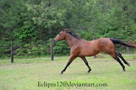 mustang horse running bay horse running 2 by eclipes12 on deviantart