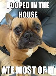 French Bulldog Meme - pooped in the house ate most of it french bulldog love animals