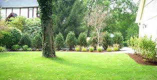 backyard trees home deco plans