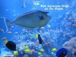 Aquarist Resume Top 30 Aquarium Blogs U0026 Websites For Aquarists U0026 Marine Enthusiasts