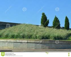 native water plants freeway plantings low water plants stock photo image 74579764