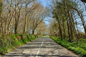an country road through trees the b3315 in cornwall