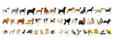 types of dogs species of dogs in india breed dogs picture