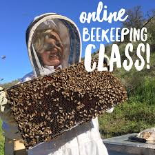 Harvesting Honey From A Top Bar Hive Beekeeping Like A 10 Mistakes New Beekeepers Make