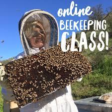 beekeeping like a 10 mistakes new beekeepers make