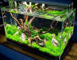 Aquarium Room Divider Tank Profile Marco Pardun U0027s 104 Gallon Room Divider Triton Reef