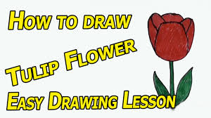 drawing how to draw cartoon tulip flower easy drawing lesson for
