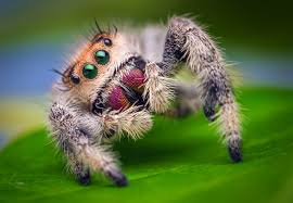 Misunderstood Spider Meme Barnorama - funny for jumping spiders funny www funnyton com