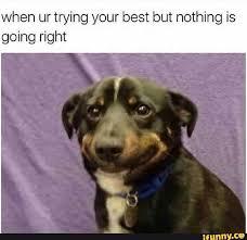 Sad Dog Meme - d77600e8e6a8e75d47cc54b0d81ddcda2867cf95be973fe6fe444f9730a8d5b9 1