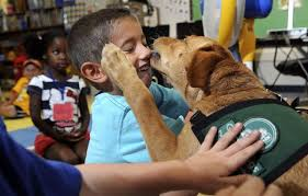 Carol Blind Training Canines Go To Educate Dogs And Kids