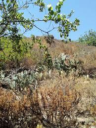 plant communities environmental nature center oak canyon nature center anaheim ca