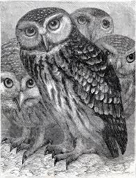 8 best images of black and white owl printables owl drawings