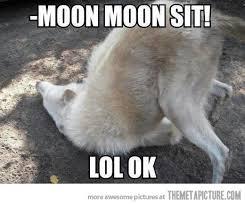 Moon Meme - oh moon moon moon meme and humor