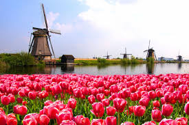 flower places 6 best places to see tulips cherry blossoms and more gorgeous