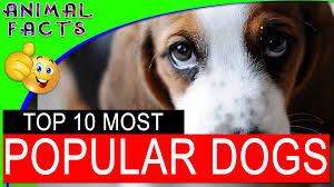 top 10 police dog breeds around the world dogs 101 u2013 animal facts
