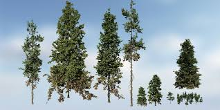 douglas fir species pack speedtree