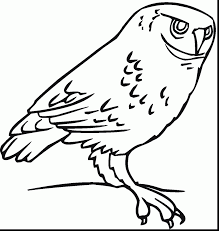 spectacular cartoon owl coloring pages with coloring pages of owls