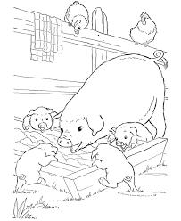 farm animal coloring page pigs slop riscos terra bichinhos