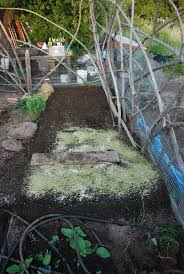 Backyard Soil Growing Tomatoes How To Grow Tomatoes Planting Tomatoes