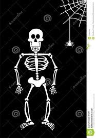 halloween skeleton on black background royalty free stock image