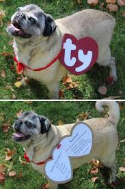 diy beanie baby dog costume tutorial template pugdemoniom