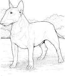 printable chocolate lab coloring pages coloring pages