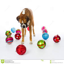 boxer dog with christmas ornaments stock photos image 27769173