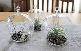 diy airplant terrarium and sculpey cow skull 9 steps with pictures