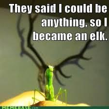 Mantis Meme - memebase praying mantis page 2 all your memes in our base